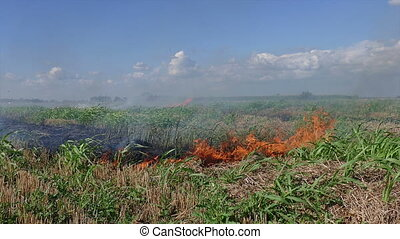 Fire in field after harvest, zoom in footage