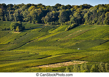 Champagne vineyards Sermiers in Marne department, France -...