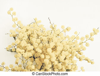 Mimosa flower plant vintage faded - Vintage faded Yellow...