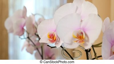 Close-up of white orchids on light background
