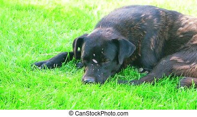 Homeless shorthaired dog laying in field sleeping