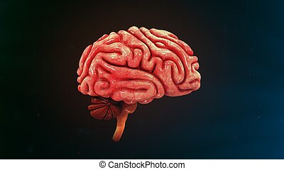 Human Brain Side view - The human brain is the command...