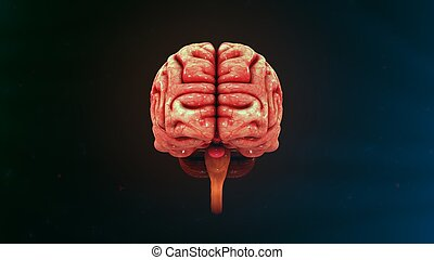 Human Brain Front view - The human brain is the command...