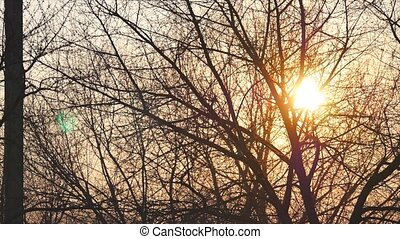 Bare tree without leaves on a background of shining sun at sunset