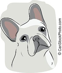 Head of French bulldog - Head of the French bulldog on gray...