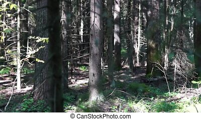 Sunny and shady forest pan - Sunny and shady wild forest...