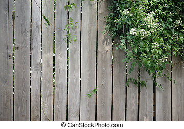 Wood plank fence - A ivy plant growing over a wood plank...