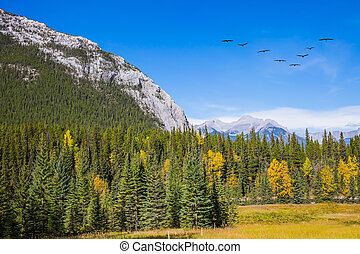 Flock of migratory birds in the sky - Mountain valley in...