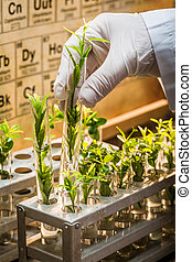 Pharmaceutical laboratory during study growing plants