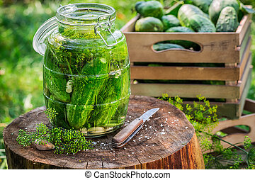 Pickling cucumbers after harvest
