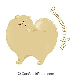 Pomeranian spitz isolated on white background - Pomeranian...
