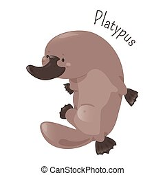 Platypus isolated on white background. Cartoon duck-billed....