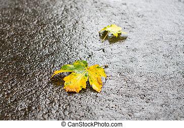 autumn leaves on the asphalt