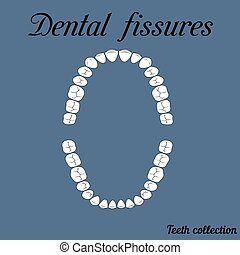 Dental fissures upper and lower jaw , the chewing surface of...