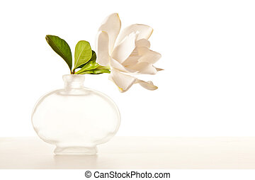 flor,  Gardenia, blanco, Mármol, tabla