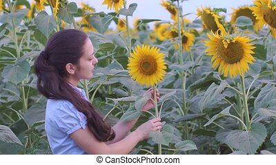 woman smiling in a field of sunflowers - young woman smiling...