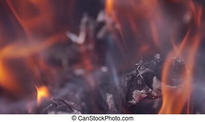 Bright burning wood, campfire macro video slow motion