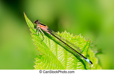 Damselfly perched on a leaf