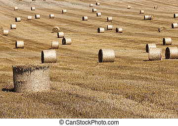 haystacks in a field of straw - haystacks straw left after...