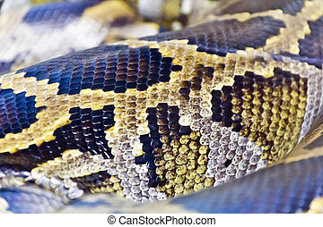 Photo of snake skin close up in zoo - Photo of real boa...