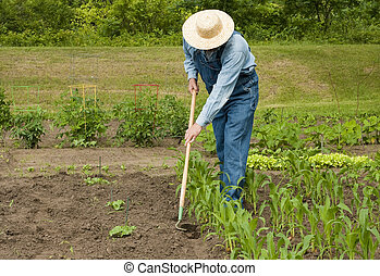 man working in his garden - man using a hoe to weed his...