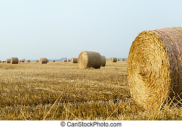 stack of straw in the field - v Agricultural field on which...