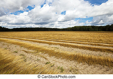 Agricultural field in autumn. - Agricultural field on which...