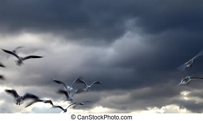 Seagulls Flying and Clouds