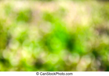 Beautiful green bokeh background