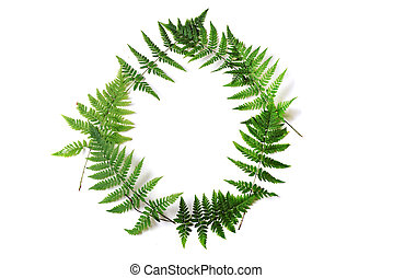 frame of fern - wreath with fern leaves isolated on white...