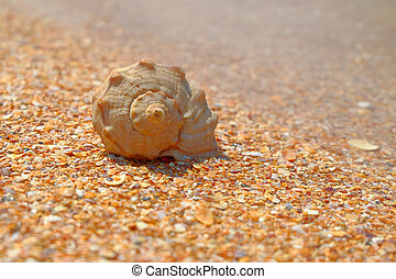Sea shell over sand and chips pf seashells as background...