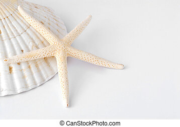 shells - sea shells with white background