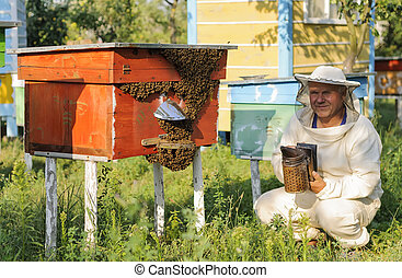 beekeeper inspects the apiary hive of bees