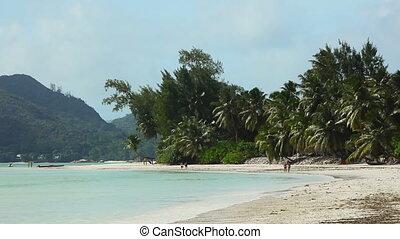 Tropical beach of Anse Volbert, Seychelles - Tropical beach...