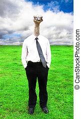 businessman with Ostrich head