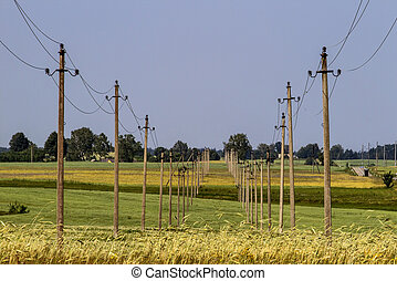 Electricity poles and wires in rural field