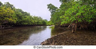 Florida Mangroves at Dusk