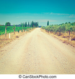 Dirt Road between Vineyards and Olive Trees in the Chianti...