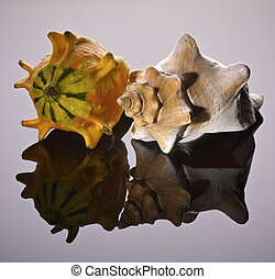 Biodiversity - Conch Shell and Gord compared on purple...