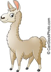 Llama cartoon - Vector of illustration Llama cartoon