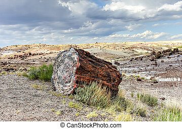 Crystal Forest - Petrified Forest National Park - The...