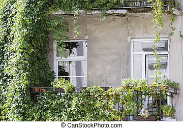 Balcony full of green plants and flowers in a old house