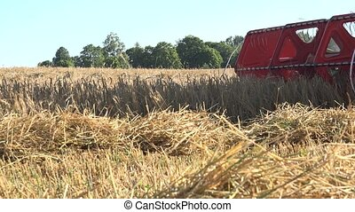 combine harvester thresh grain cereal in farmland at summer....