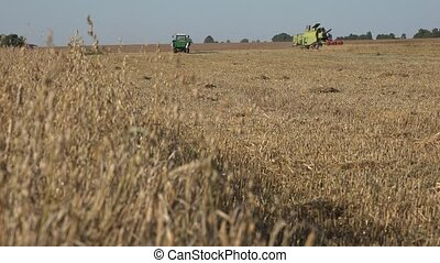 tractor combine work in oat field at harvest time in country...