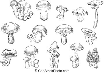 Edible and poisonous wild mushrooms, sketch style - Forest...