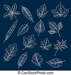 Chalk silhouettes of tree leaves - Chalk leaves of maple,...