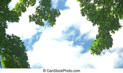Tree branches on sky background. Leaves sway in the wind....