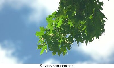 Tree branch with green leaves.