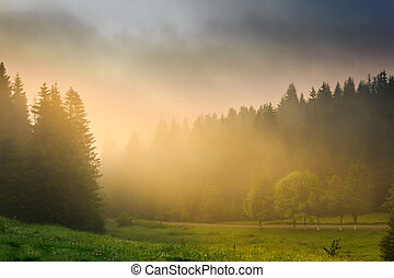 sun rays breaking through the clouds and fog in forests -...