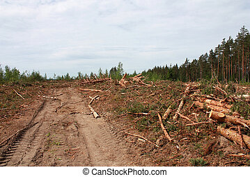 Deforestation - The cut down wood with the thrown roots and...